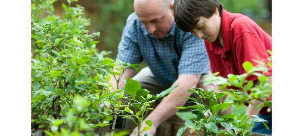 Why is gardening good for your health?
