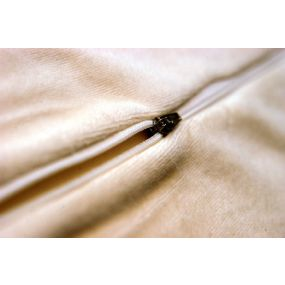 Sissel Orthopaedic Pillow Soft - Spare Pillowcase